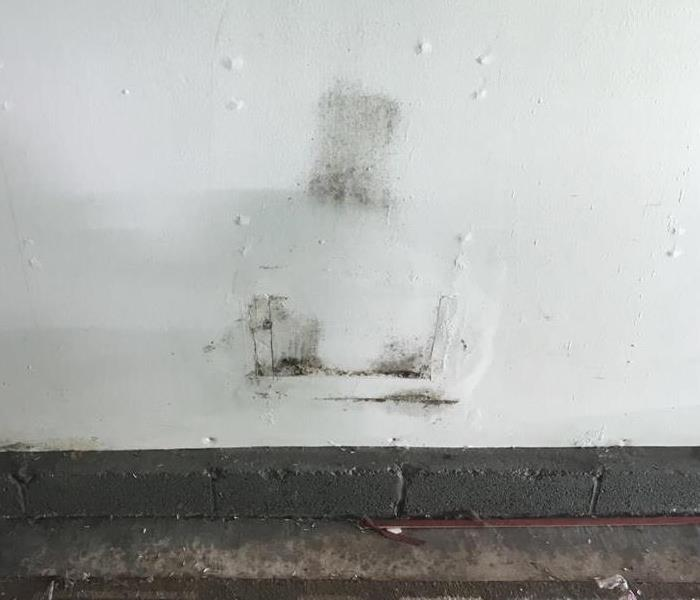 Mold Remediation Mold is Everywhere